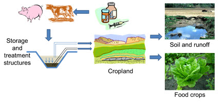 graphic showing antibiotic movement from adminstration to cropland to runoff