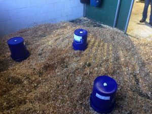 Figure 1: Placement of buckets over the stall floor for measurement of NH3 concentrations. The ammonia pump with attached gas detection tube was placed through a small hole drilled into the top of each bucket.