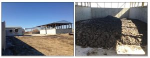 Figure 2. The storage shed for solid manure to the north of the modified scraper barn (Left), and stored solid manure (Right).